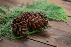 Christmas decoration: pine flowers cone Stock Images