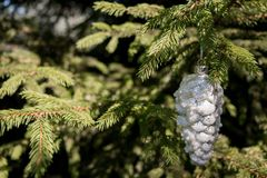 Christmas decoration with pine and blurred branch of Christmas tree stock photo