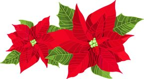 Christmas decoration poinsettia Stock Photos