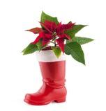 Christmas decoration poinsettia Stock Photos