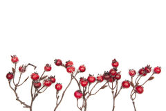 Christmas decoration red berries isolated on white background Royalty Free Stock Photos