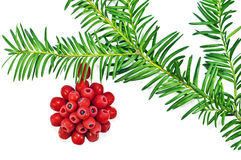The Christmas decoration with red fruit yew tree o Royalty Free Stock Image