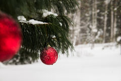 Christmas Decoration in Snowy Forest Stock Photos