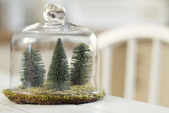 Christmas decoration. Some pines and moss under a cloche royalty free stock photos