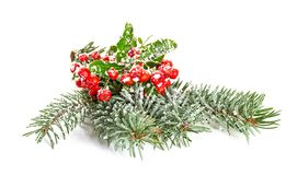 Christmas decoration with spruce branch and ivy. Isolate on white background Stock Photography