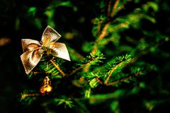 Christmas decoration on spruce tree. Gold christmas ball on spruce tree Stock Photos