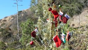 Christmas decoration on a tree in Dante`s View. Los Angeles California, United States stock footage