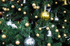 Christmas decoration on the tree Stock Image