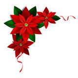 Christmas decoration on white. Christmas corner decoration on white Poinsettia with ribbons Vector for you design Royalty Free Stock Photo