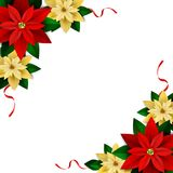 Christmas decoration on white. Poinsettia with ribbons Vector Royalty Free Stock Photo
