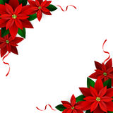Christmas decoration on white. Poinsettia with ribbons Vector Stock Photo