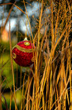 Christmas decoration in wild grass. Red bauble hangs in between some wild grass royalty free stock photos