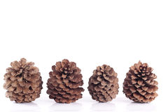 Christmas decorations. Pinecones isolated over white background Royalty Free Stock Images