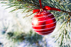 Christmas decorations big red ball on xmas tree outdoor. Stock Images