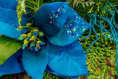 Christmas decorations - blue Poinsettia Stock Images