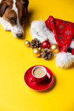 Christmas decorations, cup of coffee and dog Royalty Free Stock Photo