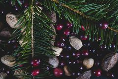 Nuts and berries with a fresh cut branch off a Christmas pine tr royalty free stock images