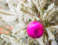 Christmas decorations on the frozen branches Stock Image