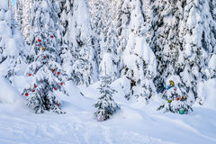 Christmas decorations on snow covered pine trees in the forest Stock Image