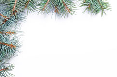 Christmas decorations. With spruce branches on white background Royalty Free Stock Image