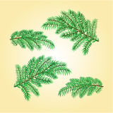Christmas decorations spruce twigs vector Royalty Free Stock Photography