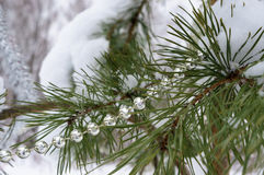 Christmas decorations on the tree in winter wood. Stock Photo