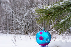 Christmas decorations on the tree in winter wood. Royalty Free Stock Photography