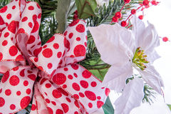 Christmas decorations - white Poinsettia with red and white bow Stock Photo
