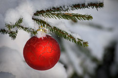 Christmas decorative ball on green branch Stock Photography