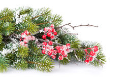 Christmas decorative snow branch with holly berry Royalty Free Stock Photo