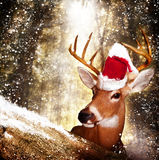 Christmas Deer. A mature deer with a Santa hat looks over a tree as the snow falls in the forest