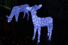 Christmas deer at the Canberra Sids and Kids light display. A picture of two snowmen at the SIDS and kids light display that drew international attention for Royalty Free Stock Photos