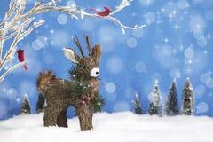 Christmas Deer and Cardinal Birds royalty free stock photography