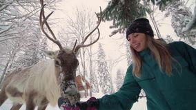 Christmas deer. Consept of christmas vacation. A happy women stretches out his hand and feeds deer with big horns in a