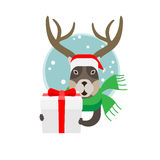 Christmas deer with a gift box Stock Photos