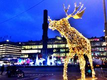 Christmas. Deer in town at stock holm Stock Image
