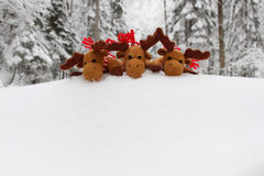 Christmas deers on the top of snowdrift Stock Photos