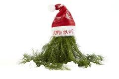 Christmas Dill On Santa Hat Stock Photo