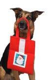 Christmas dog. A dog holding christmas present Royalty Free Stock Images