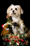 Christmas dog Stock Image