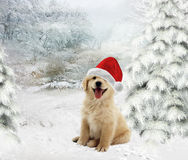 Christmas Dog. Golden Retriever puppy wearing a Santa hat on  a wintry background Stock Photo