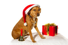 Christmas dog Stock Images