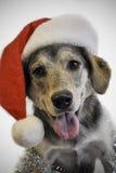 Christmas dog Stock Images