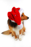 Christmas dog 2 Royalty Free Stock Images