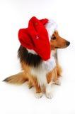 Christmas dog 2. Christmas dog close-up on white background Royalty Free Stock Images