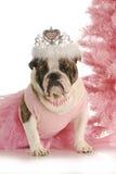 Christmas dog Stock Photography