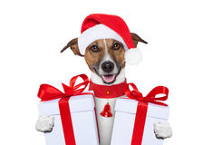Free Christmas Dog Stock Photo - 26195770