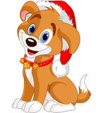 Christmas dog. With Santa's hat Stock Image