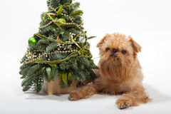Christmas and dog Royalty Free Stock Image