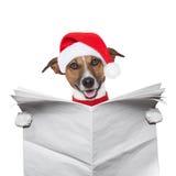 Christmas  dog. Christmas dog reading a newspaper Stock Images